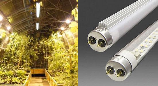 Люминесцентные лампы для теплиц