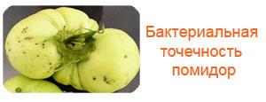 Бактериальная точечность помидор