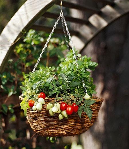Подвесные конструкции для растений