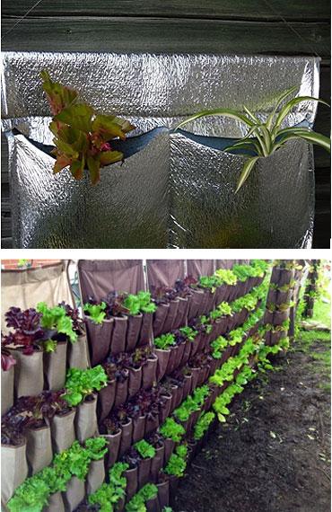 Выращивание «в кармашках»