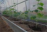 Оцинкованные грядки – что выращивают на них в теплицах и в открытом грунте?